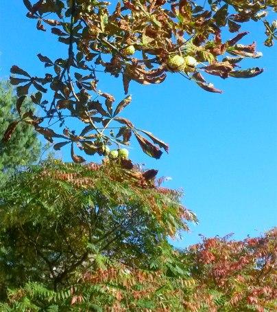 15 petits bonheurs simples d'automne - Laissons Lucie Faire
